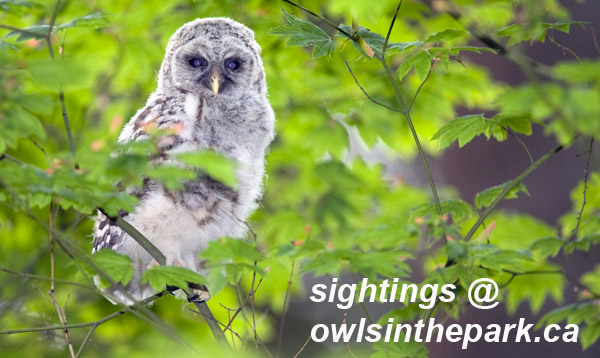 sightings at owlsinthepark
